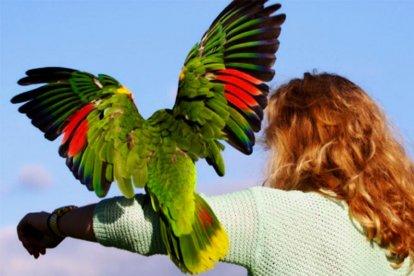 In deze geweldige workshop maak je van dichtbij kennis met prachtig gekleurde gevederde vrienden: de papegaaien. De Hybride Ara Harlekijn, Witte Kaketoe, Blauw voorhoofd Amazone en de Blauwgele Ara's, allemaal komen ze voorbij. En naar je toe. Ze komen op je hand zitten, je kunt ze knuffelen en gaat zelfs met ze vliegen!