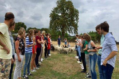 Een gezellig uitje met de hele familie of met je team. Maak kennis met de honden en de schapen en kom alles over ze te weten. Bovenal leer je tijdens deze workshop op een ongedwongen en speelse manier elkaar nóg beter kennen!