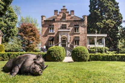 Overnacht in een van de acht luxe hotelsuites in het kleinste kasteeltje van Nederland in Roermond. De voormalige koetshuizen zijn comfortabel ingericht, ruim opgezet en eigentijds ingericht. Verras je dierbare met een overnachting inclusief viergangendiner en luxe ontbijt.