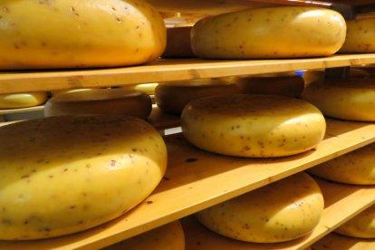 Altijd al eens willen weten hoe kaas precies gemaakt wordt? Tijdens deze workshop leer je het zelf en mag je een kijkje nemen op de boerderij!