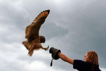 Tijdens deze workshop krijg je uitleg over diverse uilen en maak je van dichtbij kennis met deze fantastische vogels. Leer om te gaan met diverse uilen, trek een valkeniershandschoen aan, neem ze op je hand en laat ze naar je hand vliegen.