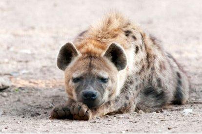 Kom naar Volkel en ontdek Dierenpark Zie-ZOO, een zorgdierentuin die mede wordt gerund door mensen met autisme. Dierenpark Zie-ZOOhuisvest een groot aantal coole dieren die je in andere dieren niet snel zult tegenkomen, zoals de zwarte Amerikaanse beer en anaconda's!