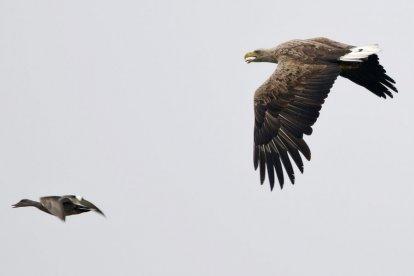 Onder leiding van een ervaren gids ga je mee op een leuke en leerzame excursie in Natuurgebied De Biesbosch. Je maakt een wandeling van 3 tot 4 uur en komt op plaatsen met grote aantallen watervogels. Misschien zie je zelfs de visarend of de zeearend. Een geweldige ervaring!